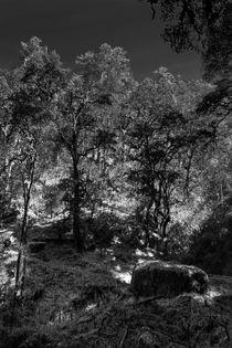 Der Wald von Guru Rinpoche III von Helge Lehmann