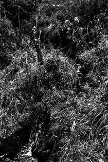 Der Wald von Guru Rinpoche IV von Helge Lehmann