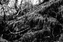 Der Wald von Guru Rinpoche V von Helge Lehmann
