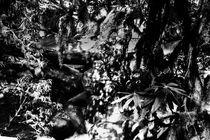 Der Wald von Guru Rinpoche VI von Helge Lehmann