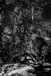 Der Wald von Guru Rinpoche I von Helge Lehmann