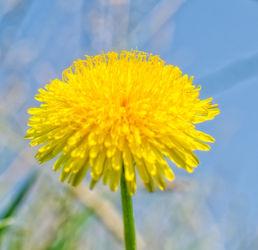 Blume-001