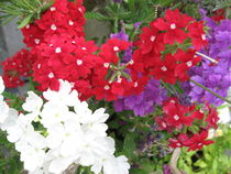 Farben des Sommers von Susanne Winkels