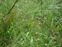 Gras mit Wassertropfen by Susanne Winkels