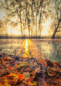 Sun shining by Giordano Aita