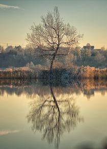 The alone tree von Giordano Aita
