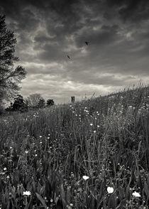 swallows on meadow von Giordano Aita