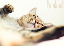 Cat thinking by Giordano Aita