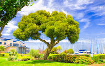 Twisted Trunk At Pier 39 by John Bailey