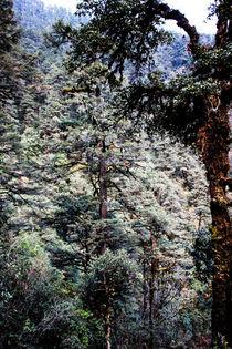 Der Wald von Guru Rinpoche XII von Helge Lehmann