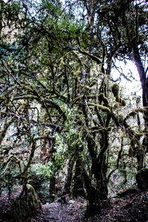 Der Wald von Guru Rinpoche XI von Helge Lehmann