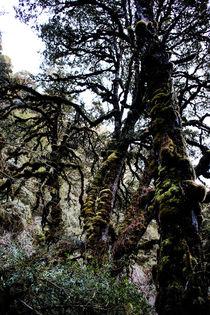 Der Wald von Guru Rinpoche X von Helge Lehmann