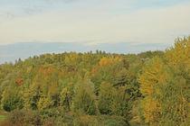 Herbstwald im Ruhrgebiet by toeffelshop