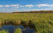 Magnificent Minnesota Marshland by John Bailey