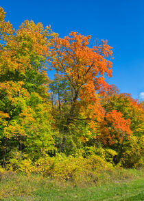 Autumn Minnesota Countryside von John Bailey
