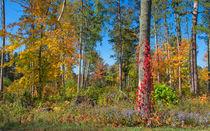 Delightful Forest von John Bailey