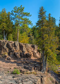 Trees Bonding With Rocks by John Bailey