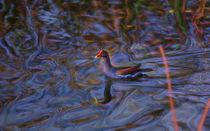 Uncharted Waters von John Bailey
