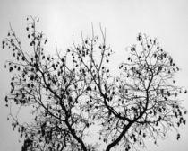 Branches von Impulse Expression