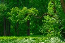 'In the summer in the park' von Anatoliy Spiridonov