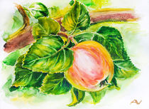 Ripe red apples on branch. Watercolor. von valenty