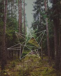 Mystic Forest von Florian Barfrieder