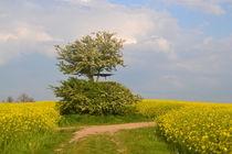 Feldweg von Ute Bauduin
