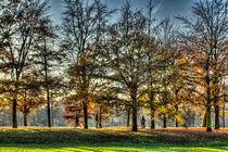 Romance in Greenwich Park von David Pyatt