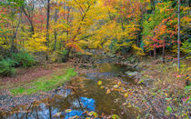 Many Colored Forest von John Bailey