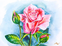 Beautiful rose, watercolor painting von valenty