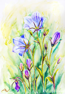 Watercolor painting of the bell flowers by valenty
