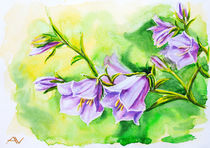 Watercolor painting of the bell flowers von valenty