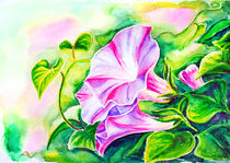 Convolvulus flowers. Watercolor painting. von valenty