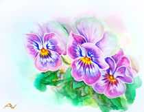 Tender pansies flowers. Watercolor painting. by valenty