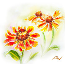 Painted watercolor card with helenium flowers by valenty