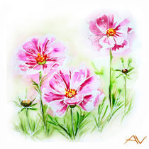 Painted watercolor card with cosmos flowers by valenty