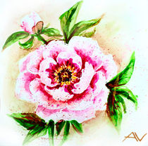 Painted watercolor card with peony flower by valenty