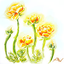 Painted watercolor card with globe-flowers by valenty