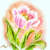 Pink tulips, watercolor painting. von valenty