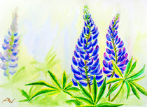 Lupine flowers, watercolor von valenty
