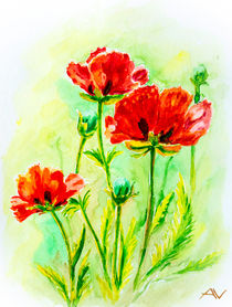 Poppies on green, watercolor von valenty