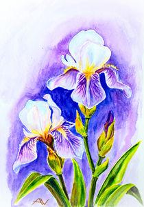 Irises, watercolor by valenty