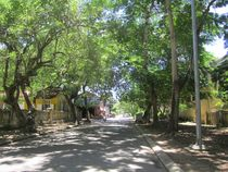 Grüne Straße in Hue by Barney Rothsteen
