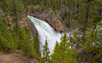 The Thundering Lower Yellowstone Falls von John Bailey