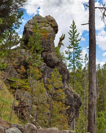 Yellowstone20140622-728a