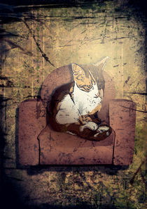 Gpeter-old-cat