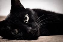 Black cat lying on the floor von Gema Ibarra