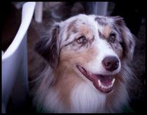 Mastiff Dog von Gema Ibarra