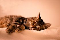 Img-3814-gato-atigrado-durmiendo