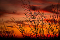Orange sky with branches by Gema Ibarra